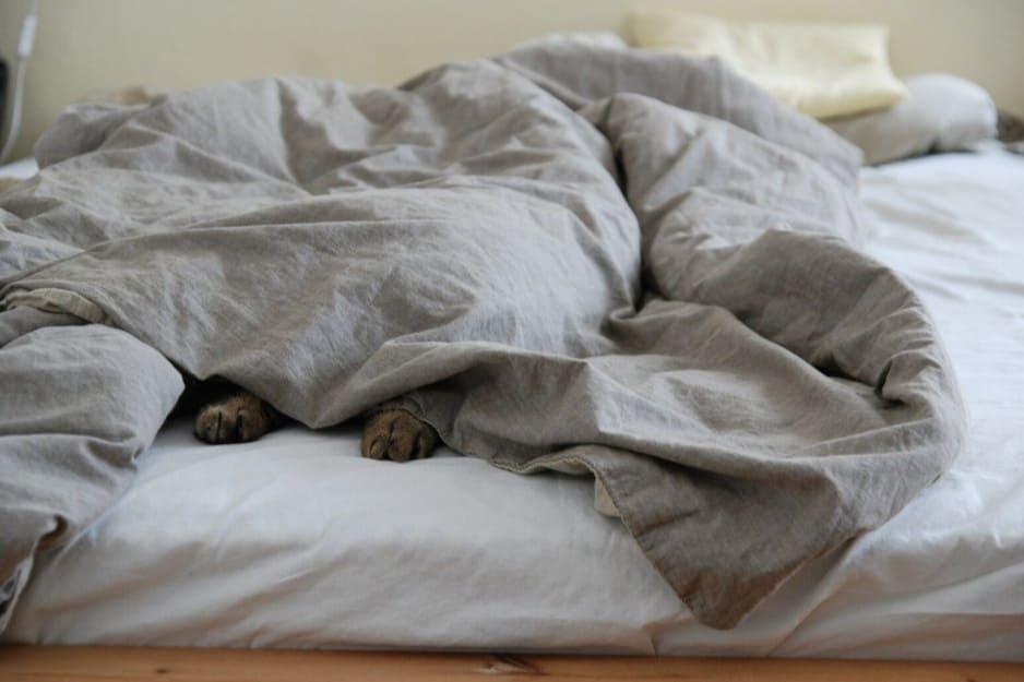 Gatto si nasconde sotto le lenzuola