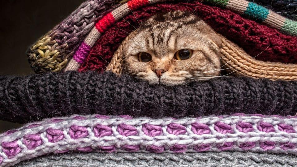 Gatto sta al caldo tra indumenti di lana