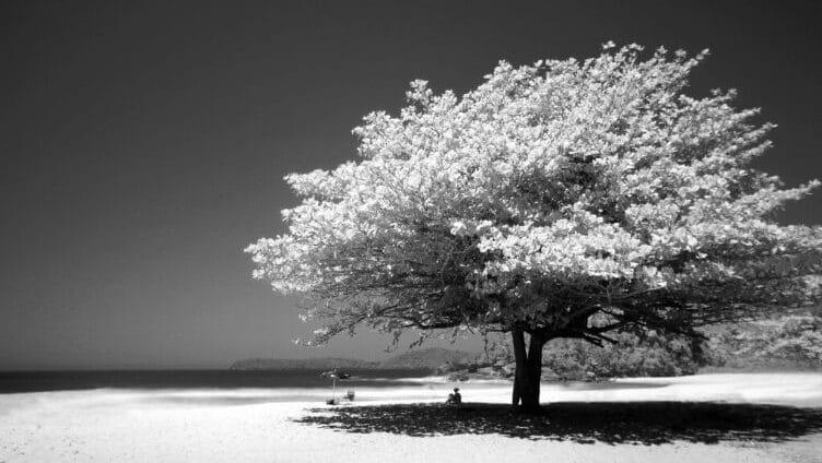 Una donna seduta sola sotto un grande albero