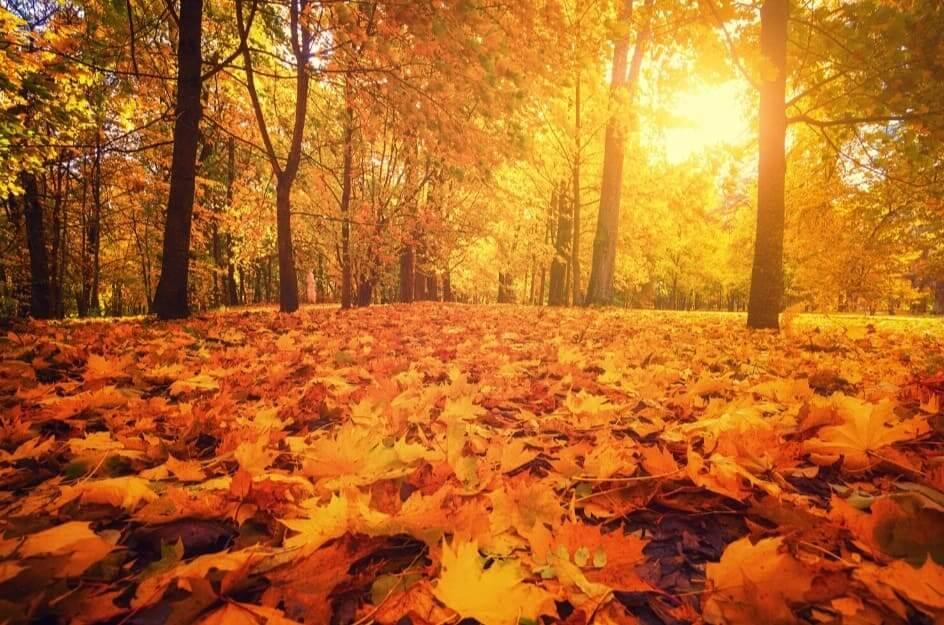 Bosco autunnale con foglie a terra