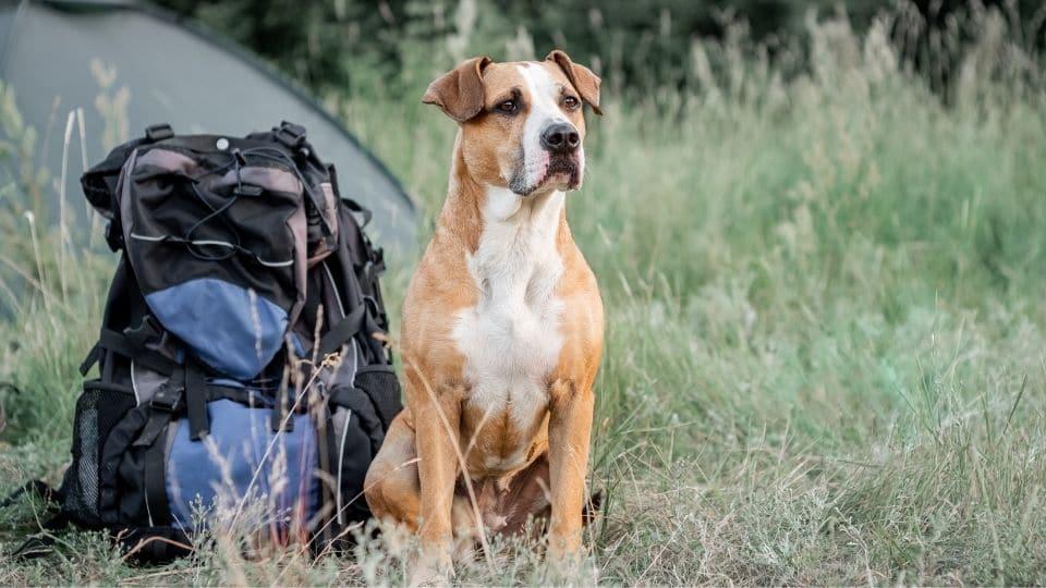 Un cane accanto allo zaino