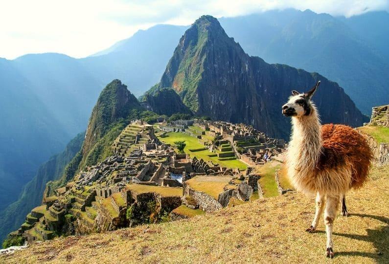 foto di un lama sul Cammino Inca in Peru
