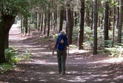 pellegrina cammina lungo un sentiero in un bosco